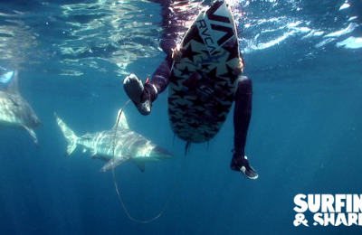 SURFING AND SHARKS – THE DOCUMENTARY